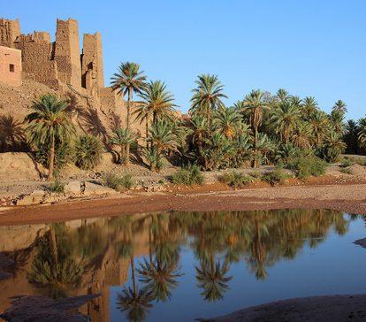 Maroc-Palmeraie-Tamougalt-voyage