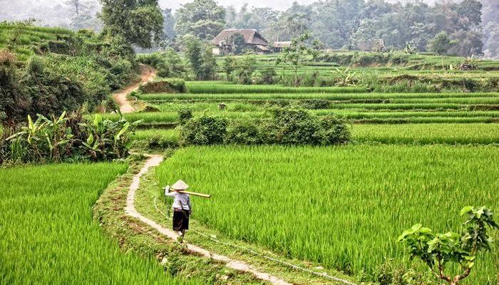 Ethnies nord Vietnam