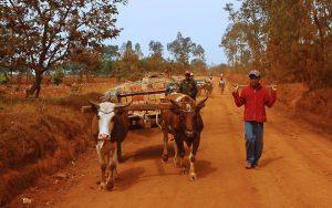 Infos pratiques voyage à Madagascar