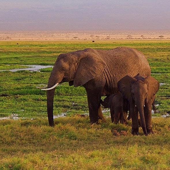 voyages Afrique