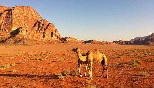 Jordanie Pétra désert
