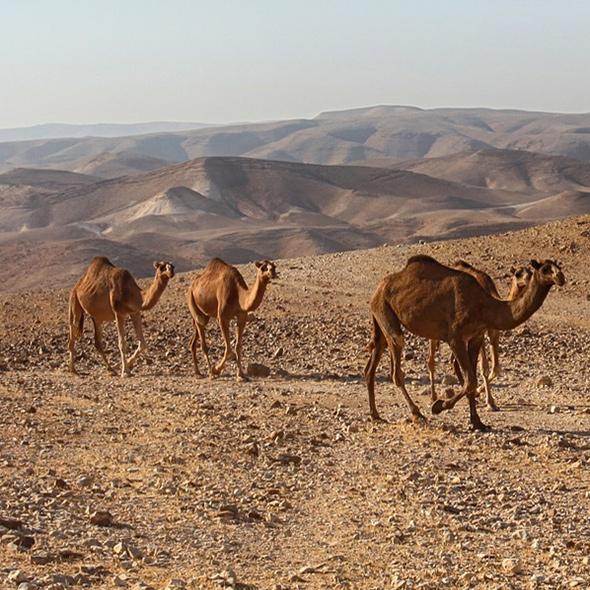voyages Moyen-Orient