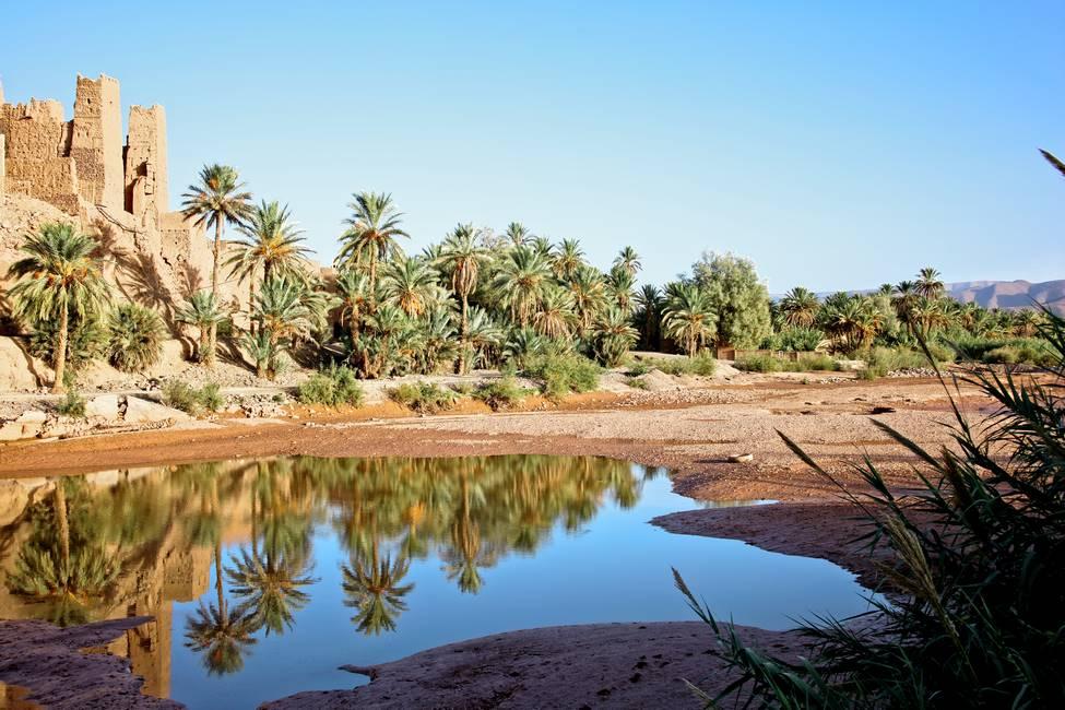 Ancien ksar dans la palmeraie de la vallée du Drâa au Maroc