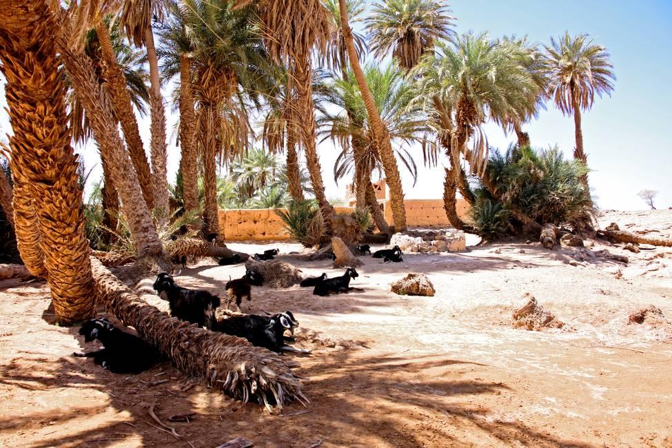 Oasis sacré dans le désert du Sahara proche de Chégaga et M'Hamid au Maroc