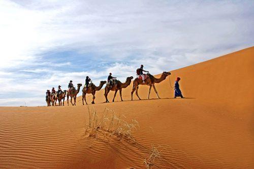 Méharée en dromadaires dans les dunes dudésert du sahara au Maroc