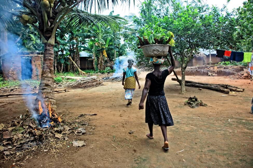 Des femmes qui rentrent des champs avec du manioc sur la tête dans un village au Togo