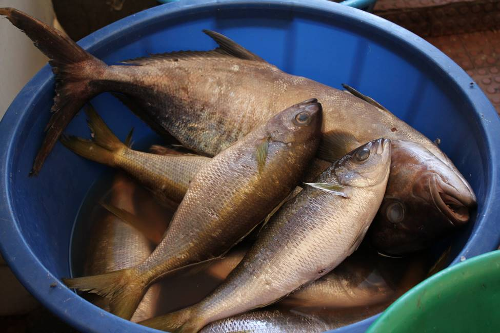 Poisson frais sur le marché de Assomad sur l'île de Santiago au Cap-Vert