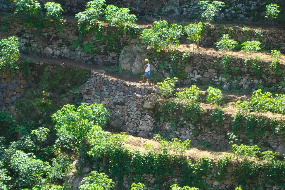 Agriculture en terrasse sur l'île de Santo Antao au Cap-Vert