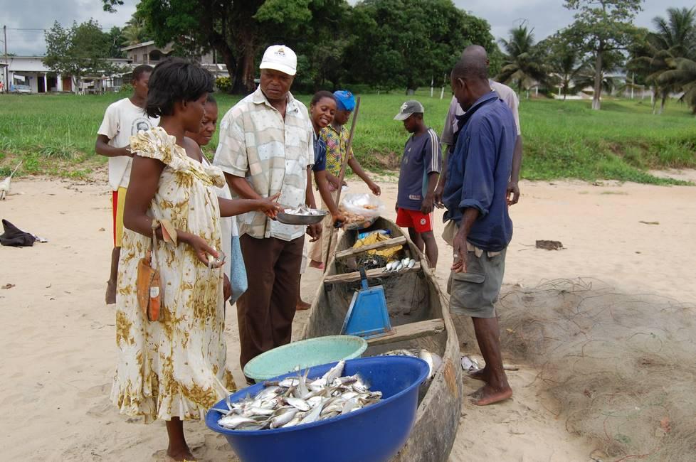 Pêcheurs vendant leurs poissons sur la plage de Kribi au Cameroun