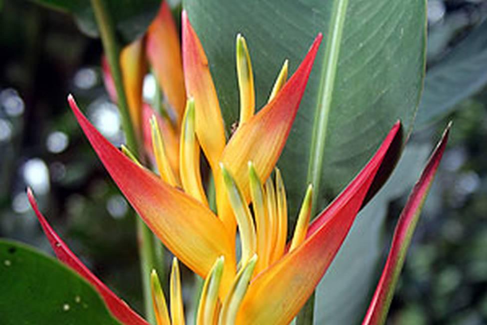 Fleur Caplain au Cameroun