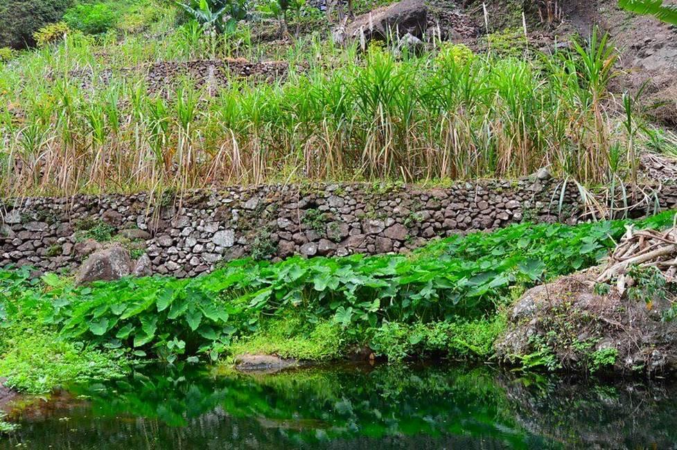 Paysage de la vallée de Paul sur l'île de Santo Antao au Cap-Vert