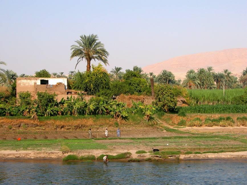 Rive du nil proche d'Assouan dans le sud de l'Egypte