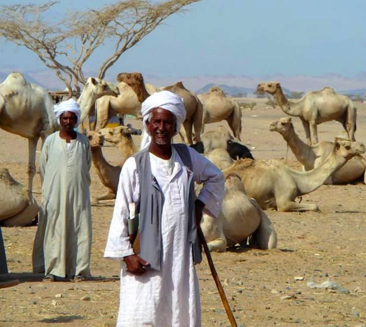 Bdouins gardant leur troupeau de dromadaires dans le désert en Egypte