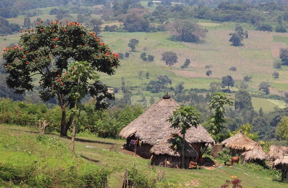 Cases traditionnelles dans un village de la région de Jimma dans le sud de l'Etiopie
