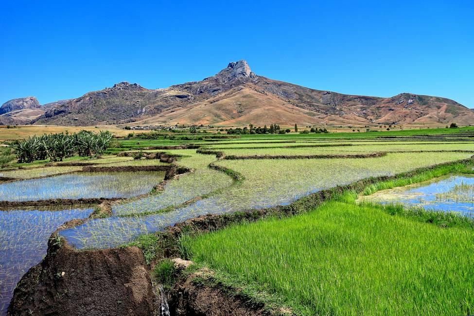 Paysages de rizières dans la vallée de Tsaranoro à Madagascar
