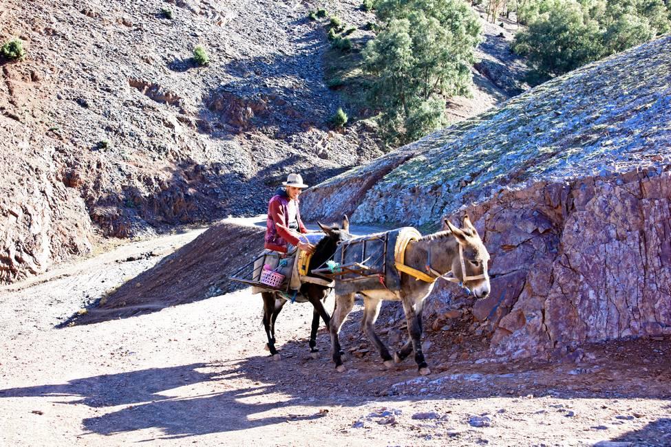 Balade à dos d'âne dans la vallée de l'Ourika au Maroc