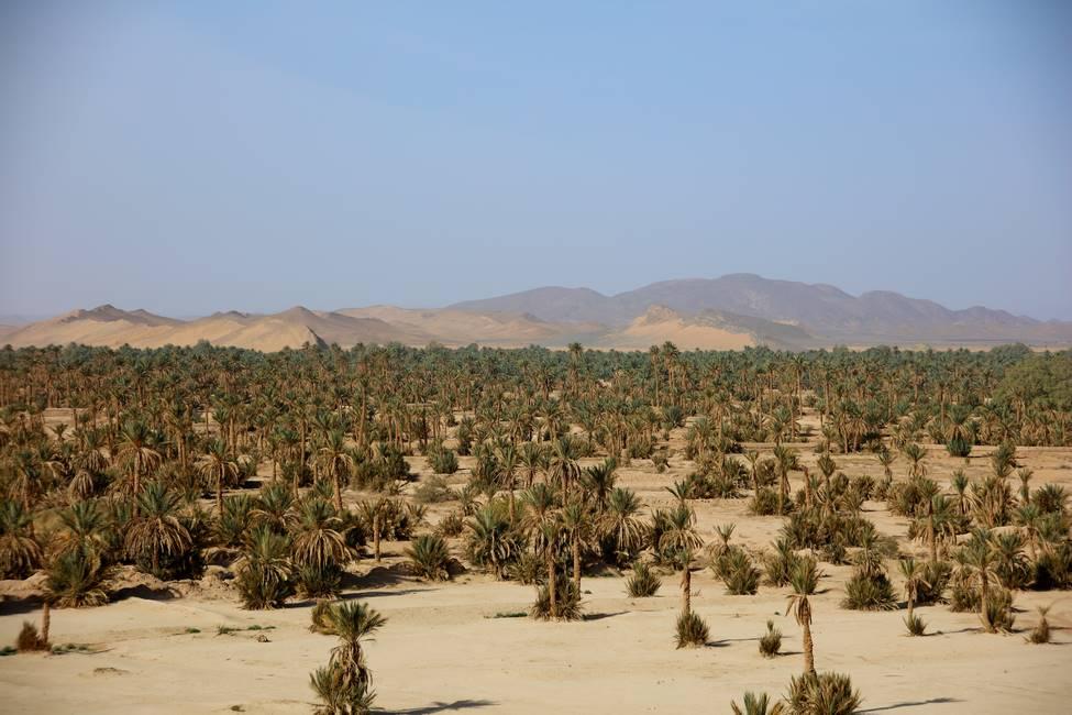 Palmeraie de la vallée du Ziz près de Merzouga au Maroc