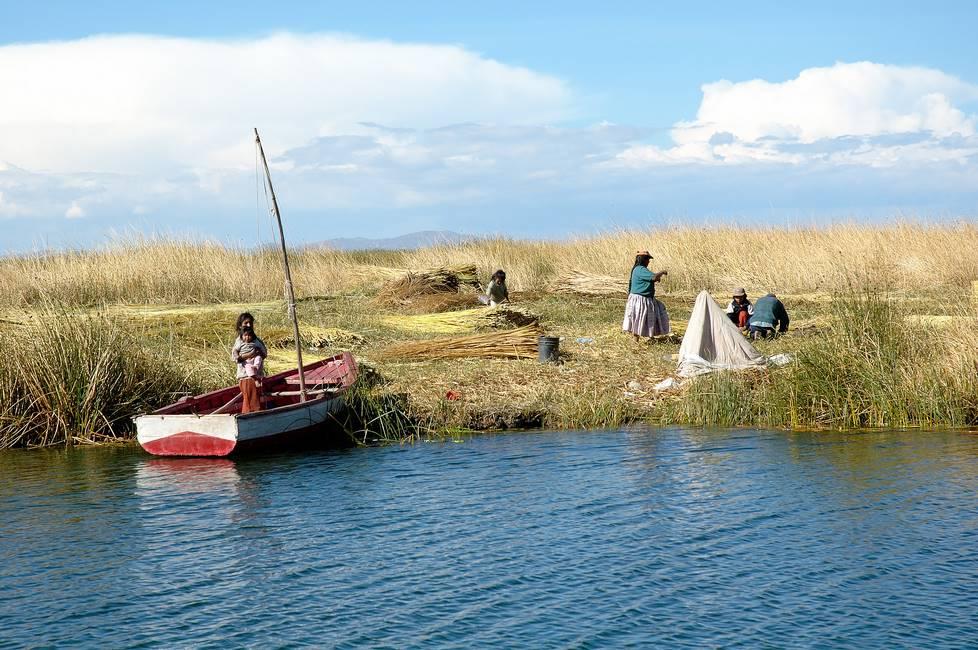 Paysans ramassant des roseaux sur l'île d'Amantani sur le lac Titicaca au Pérou