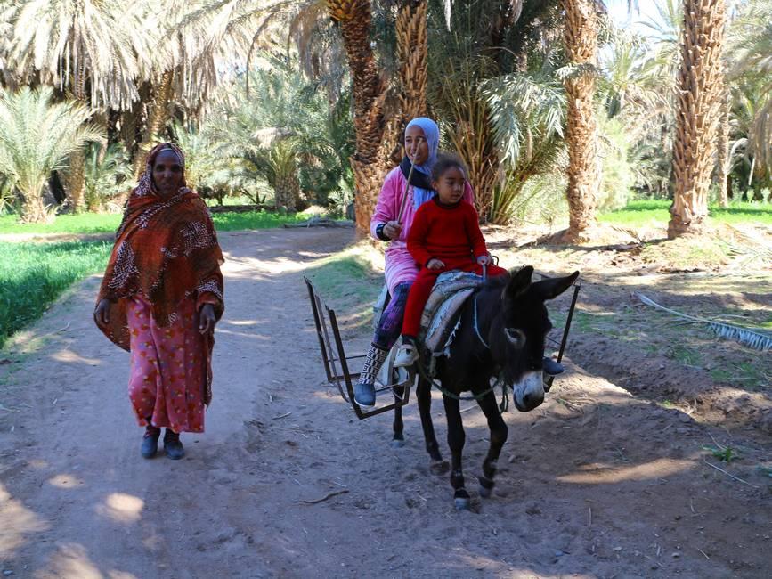 Femme à dos d'âne dans la palmeraie de l'oasis du Ziz au Maroc