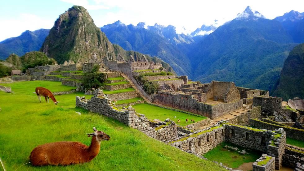 Alpaga sur le site du Machu Picchu au Pérou