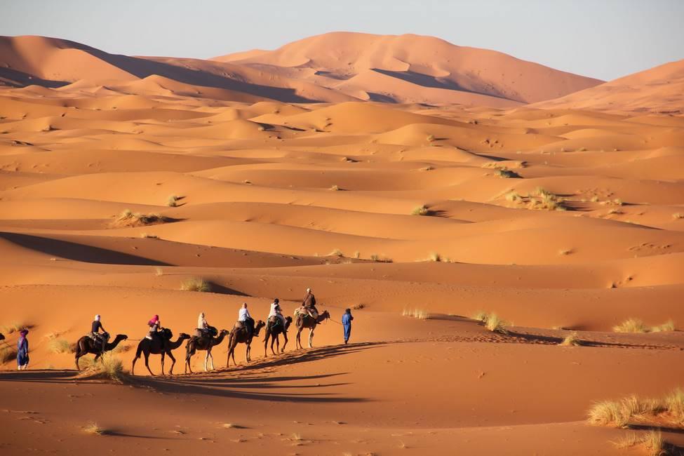 Dromadaires dans les dunes du désert de Mezouga au Maroc