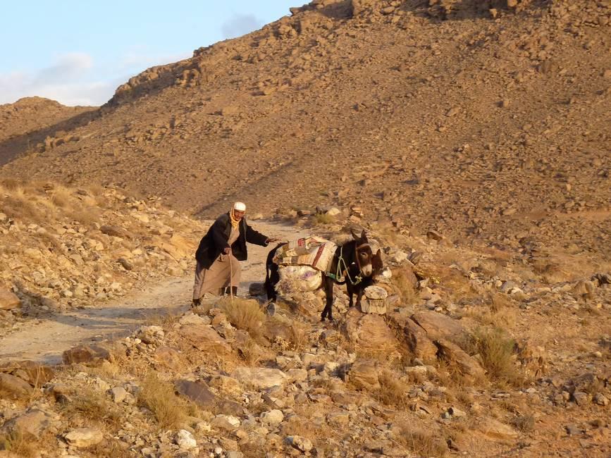 Homme avec ses ânes dans la montagne au Maro