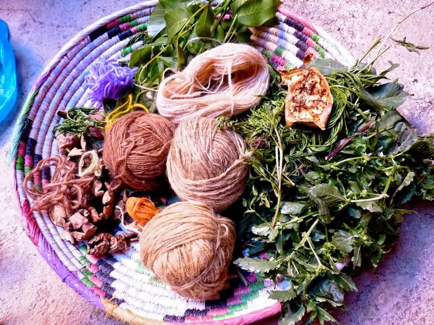 Plantes pour la teinture naturelle de la laine au Maroc