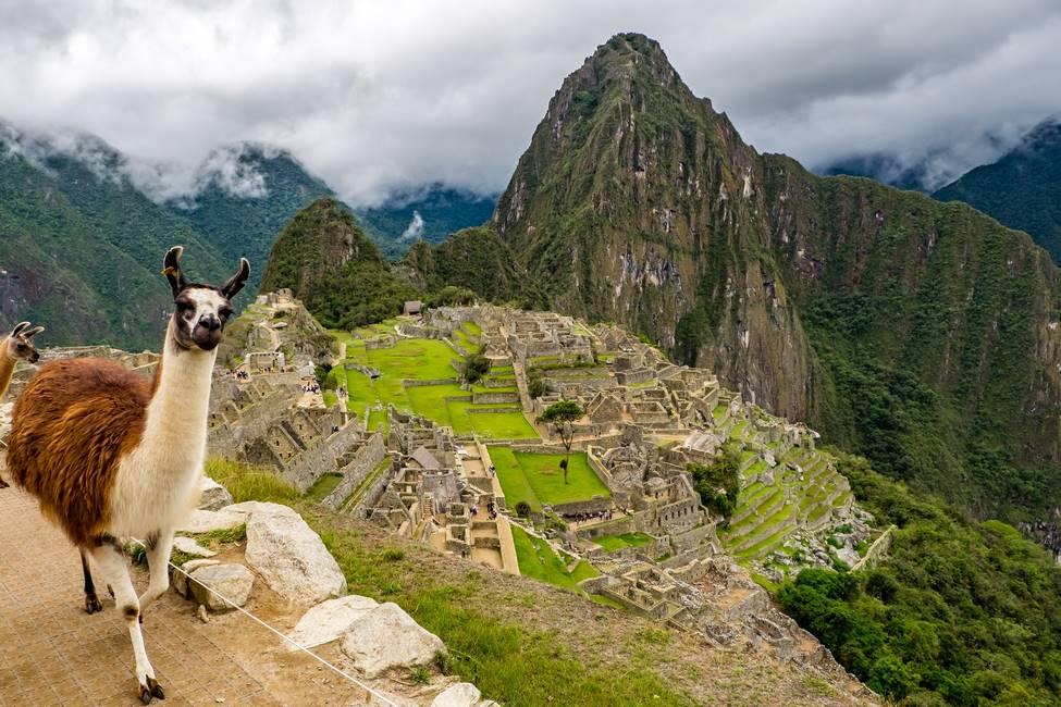 Alpaga sur le site du Machu Picchu dans les Andes au Pérou