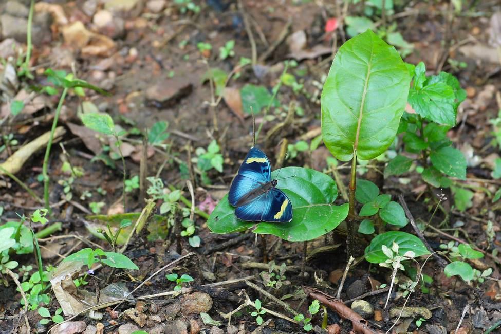 Papillon dans la forêt de Kouma Konda au Togo