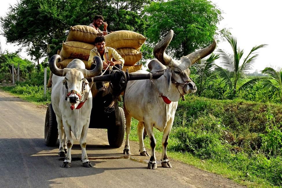 Scène de vie rurale au Rajasthan