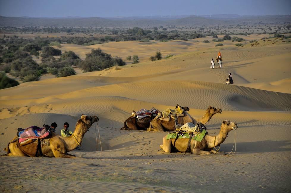 Dromadaires sur les dunes du désert du Thar au Rajasthan