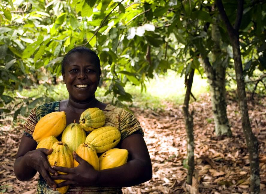 Fève de cacao au Togo