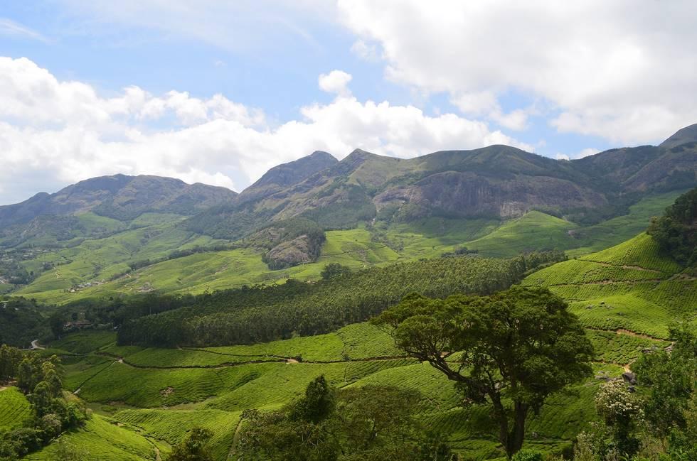 Panorama sur les plantations de thé à Munnar dans le Kérala au sud de l'Inde