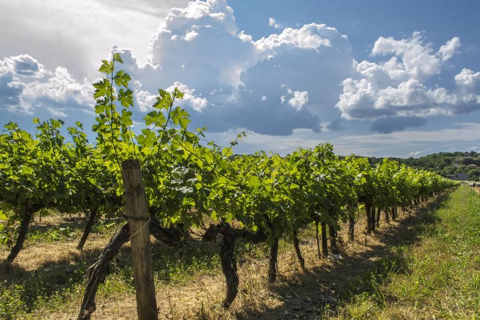 Vignes de l'Ardèche