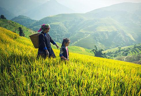 Travail dans les rizières au Nord Vietnam