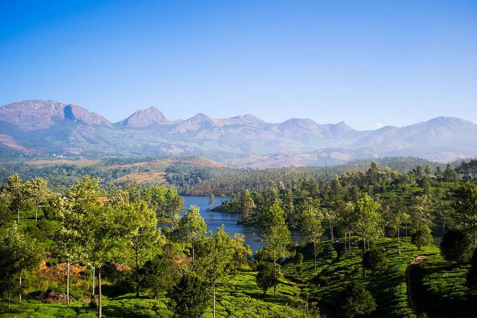 Panorama sur les plantations de thé dans le Kérala au sud de l'Inde