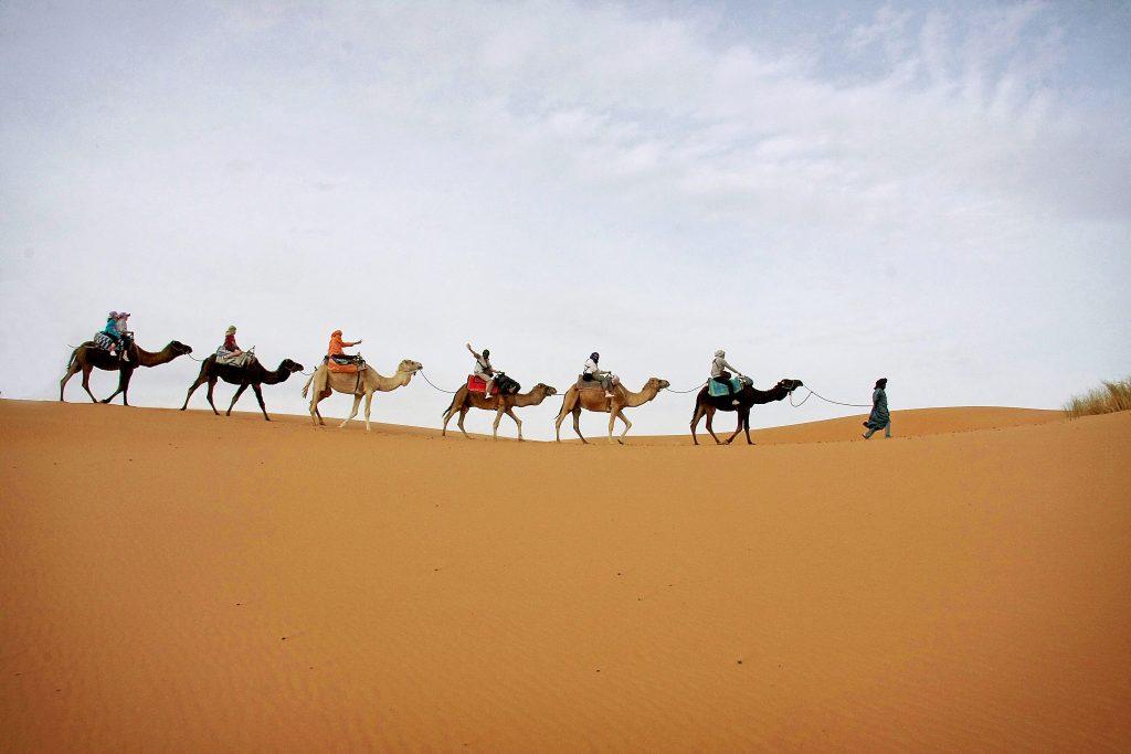 Méharée à dos de dromadaire dans le désert au Maroc